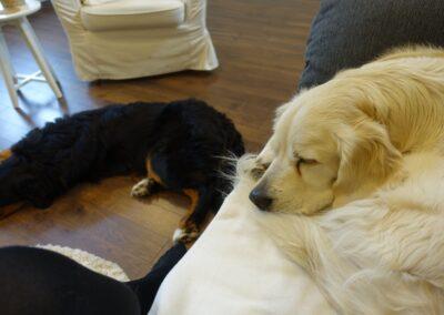 tiergestützte Traumatherapie